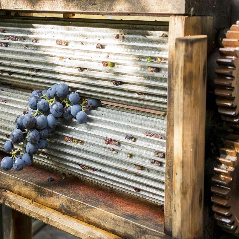 Estrujadora de uva for Cocina molecular definicion